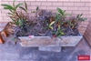 10x Assorted Plant in Pots